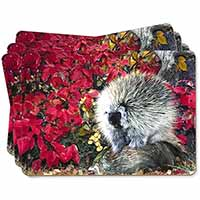 Porcupine Wildlife Print Picture Placemats in Gift Box
