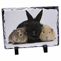 Rabbit and Guinea Pigs Print Photo Slate Christmas Gift Idea