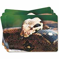 Boa Constrictor Snake Picture Placemats in Gift Box