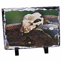Boa Constrictor Snake Photo Slate Photo Ornament Gift