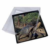 4x Giant Galapagos Tortoise Picture Table Coasters Set in Gift Box