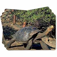 Giant Galapagos Tortoise Picture Placemats in Gift Box