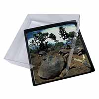 4x Galapagos Tortoise Picture Table Coasters Set in Gift Box
