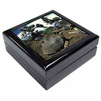 Galapagos Tortoise Keepsake/Jewel Box Birthday Gift Idea