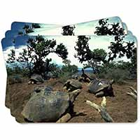 Galapagos Tortoise Picture Placemats in Gift Box