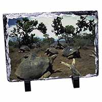 Galapagos Tortoise Photo Slate Christmas Gift Idea