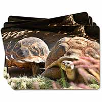 Giant Tortoise Picture Placemats in Gift Box