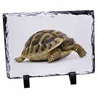 A Cute Tortoise Photo Slate Photo Ornament Gift