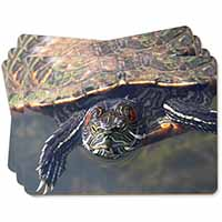 Terrapin Intrigued by Camera Picture Placemats in Gift Box