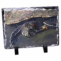 Terrapin Intrigued by Camera Photo Slate Photo Ornament Gift