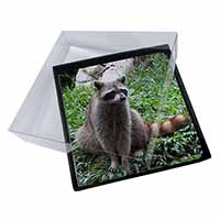 4x Racoon Lemur Picture Table Coasters Set in Gift Box