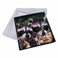 4x Cute Baby Racoons Picture Table Coasters Set in Gift Box