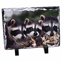 Cute Baby Racoons Photo Slate Photo Ornament Gift