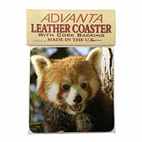 Red Panda Bear Single Leather Photo Coaster Perfect Gift