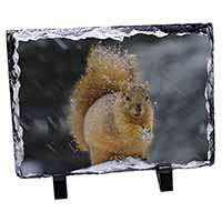 Red Squirrel in Snow Photo Slate Photo Ornament Gift