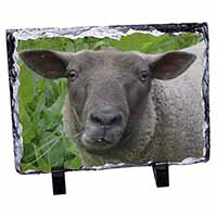 Cute Sheeps Face Photo Slate Photo Ornament Gift