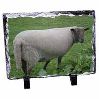 Sheep in Field Photo Slate Photo Ornament Gift