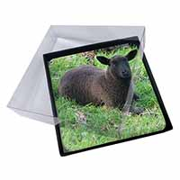 4x Black Lamb Picture Table Coasters Set in Gift Box