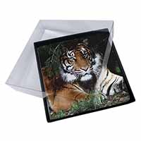 4x Bengal Tiger in Sunshade Picture Table Coasters Set in Gift Box