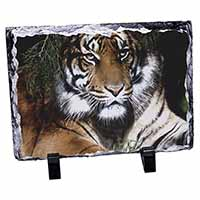 Bengal Tiger in Sunshade Photo Slate Photo Ornament Gift