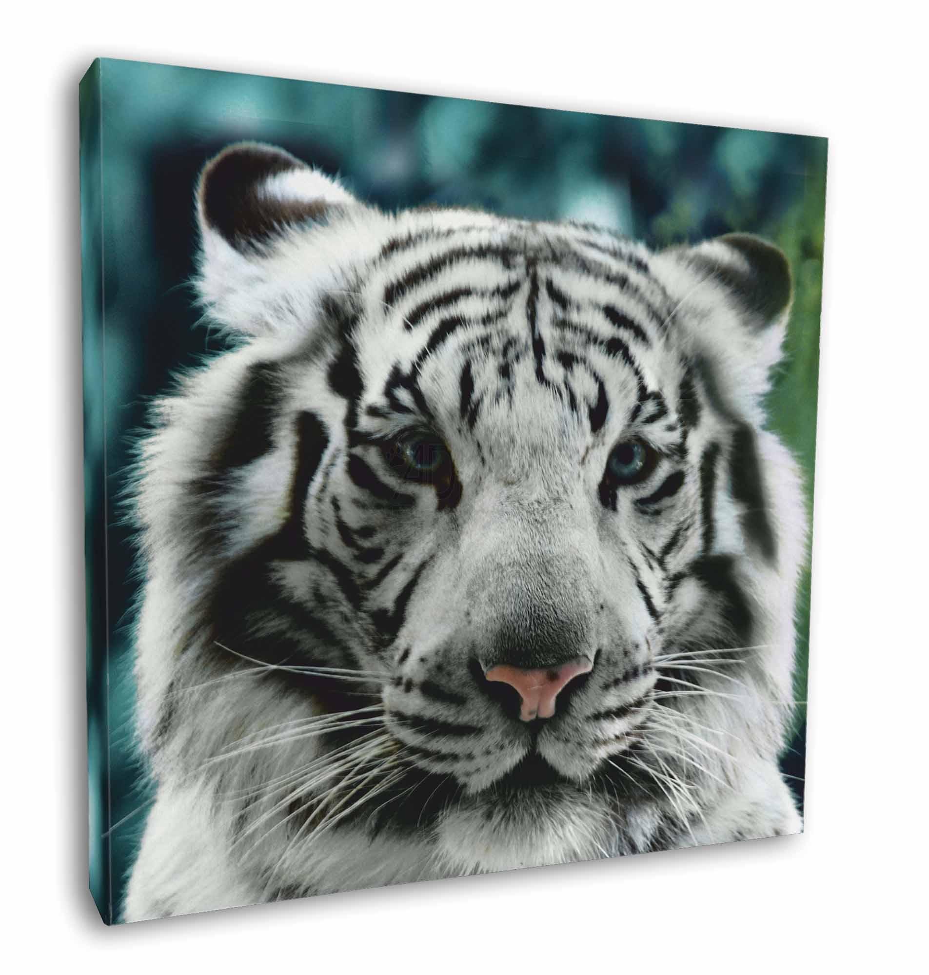 Siberian White Tiger Photo Keyring Animal Gift AT-13K