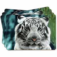 Siberian White Tiger Picture Placemats in Gift Box