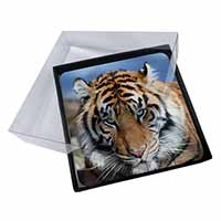 4x Bengal Tiger Picture Table Coasters Set in Gift Box