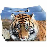 Bengal Tiger Picture Placemats in Gift Box