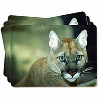 Stunning Big Cat Cougar Picture Placemats in Gift Box