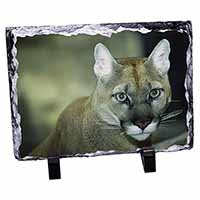 Stunning Big Cat Cougar Photo Slate Photo Ornament Gift