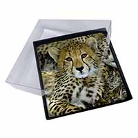 4x Baby Cheetah Picture Table Coasters Set in Gift Box