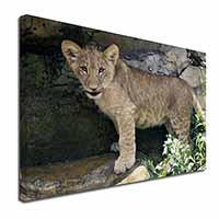 "Lion Cub Ex Large 30""x20"" Picture Wall Art"