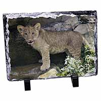 Lion Cub Photo Slate Photo Ornament Gift