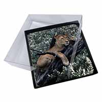 4x Lioness in Tree Picture Table Coasters Set in Gift Box