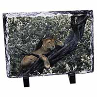Lioness in Tree Photo Slate Christmas Gift Idea