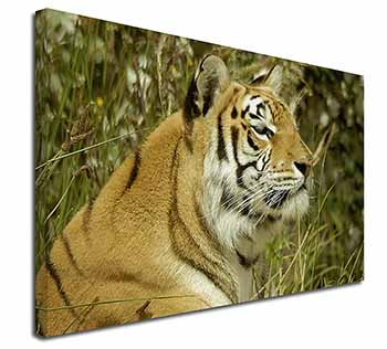 "Bengal Tiger Ex Large 30""x20"" Picture Wall Art"