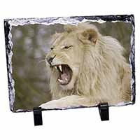 Roaring White Lion Photo Slate Photo Ornament Gift