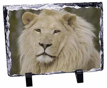 Gorgeous White Lion Photo Slate Photo Ornament Gift