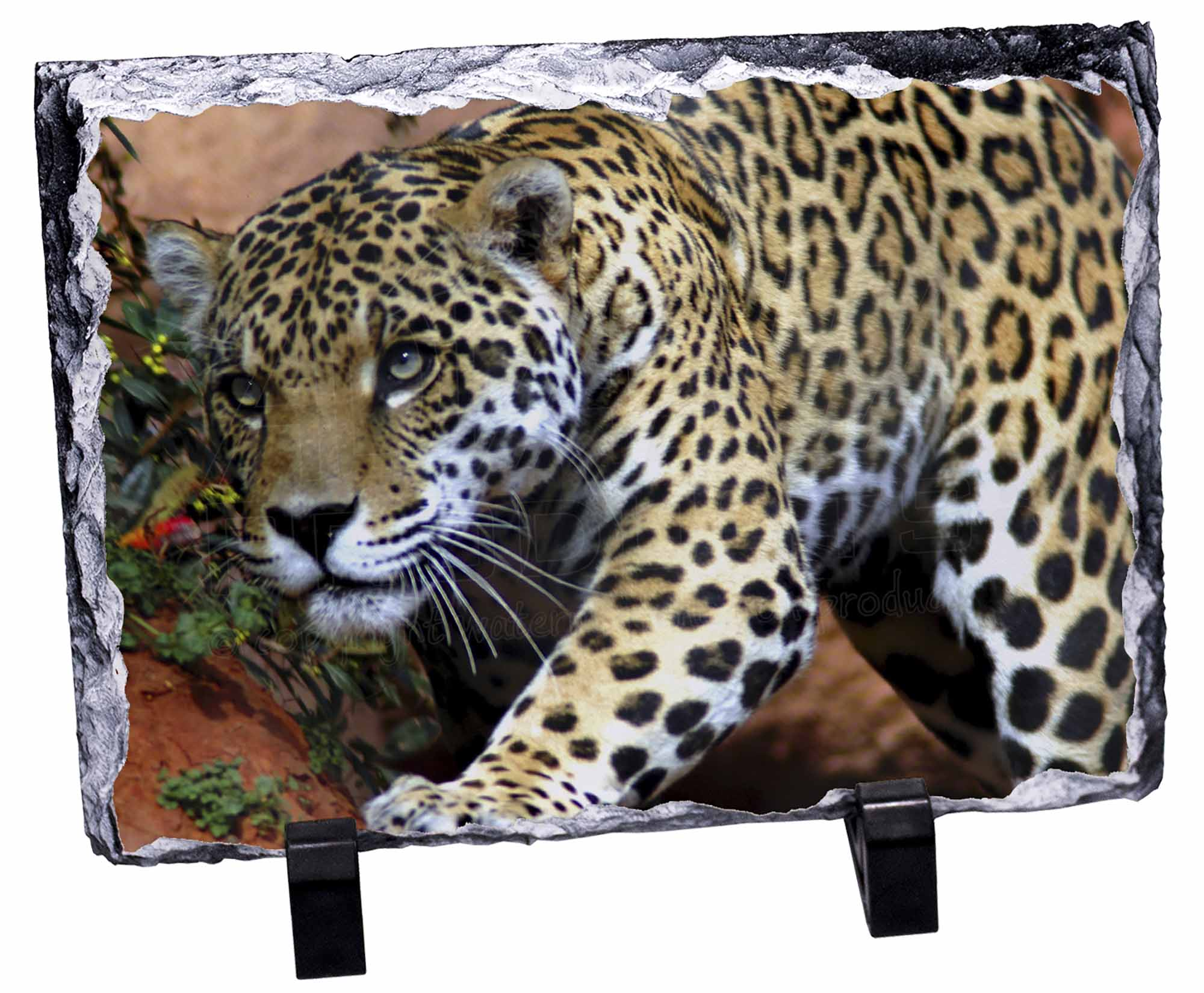 Jaguar Photo Slate Christmas Gift Ornament AT-4SL