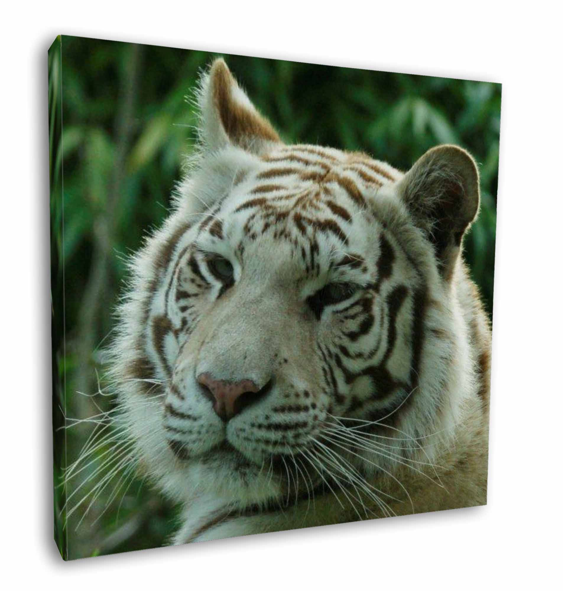 White Tiger In Snow Set of 4 Placemats and Coasters Home Cookware, Dining & Bar Supplies