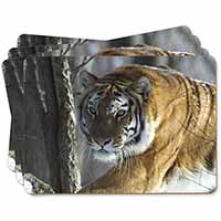 Tiger in Snow Picture Placemats in Gift Box