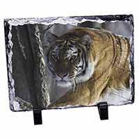Tiger in Snow Photo Slate Photo Ornament Gift