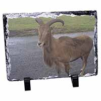 Cute Nanny Goat Photo Slate Christmas Gift Ornament