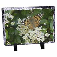 Painted Lady Butterfly Photo Slate Photo Ornament Gift