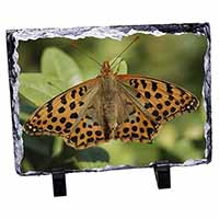 Butterflies, Tiger Moth Butterfly Photo Slate Photo Ornament Gift