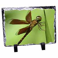 Dragonflies, Close-Up Dragonfly Print Photo Slate Photo Ornament Gift