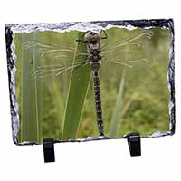 Dragonfly Print Photo Slate Photo Ornament Gift