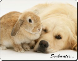 Goldie and Rabbit
