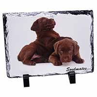 Chocolate Labrador Dogs