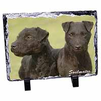 Patterdale Terrier Dogs
